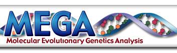 essay on evolution and genetics